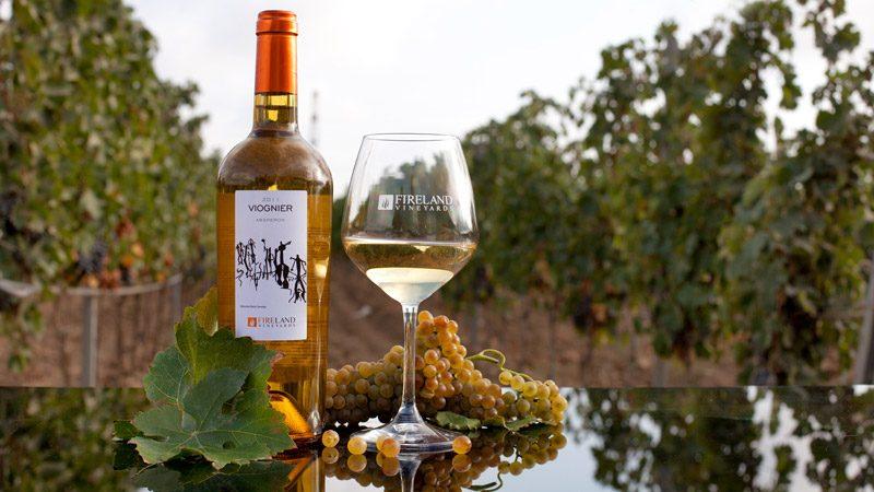wine-tour-baku-13-800x450